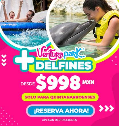 Ventura nado con delfines locales